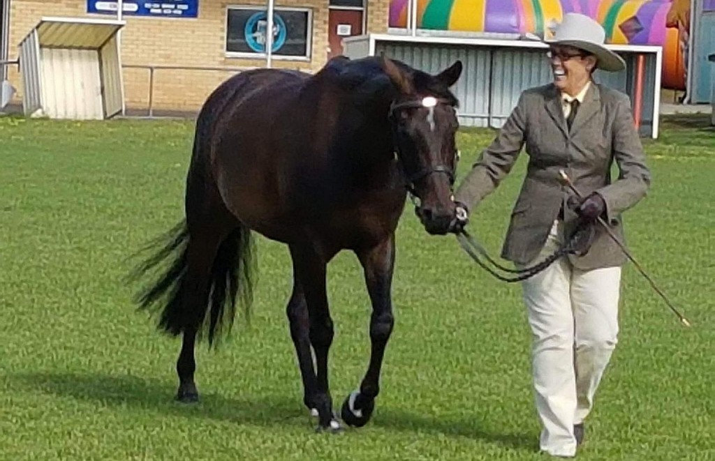Woman leading a stockhorse at a show
